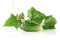 Fresh raw cucumber with leaves and flower on white Stock Photos