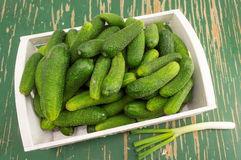 Fresh raw cucumbers in a box. Fresh raw cucumbers in a wooden box Stock Images