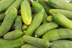 Fresh raw cucumbers on a pile. Fresh raw cucumbers on a big pile Royalty Free Stock Photography