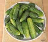 Fresh raw cucumbers in white plate on a table. Many fresh raw cucumbers in white plate on a table Stock Photos