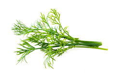 Fresh raw dill isolated on white Royalty Free Stock Photo