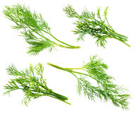 Fresh raw dill isolated on white. Background Royalty Free Stock Image