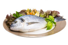 Fresh raw dorada Stock Images