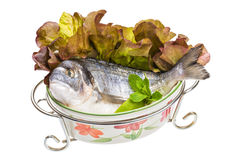 Fresh raw dorada Stock Image
