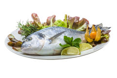 Fresh raw dorada Royalty Free Stock Photo