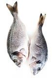 Fresh raw dorado fish isolated on white background.  Stock Photography