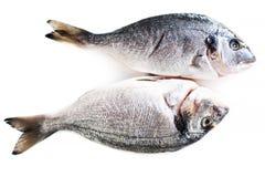 Fresh raw dorado fish isolated on white background Royalty Free Stock Images