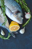 Fresh raw dorado fish with rosemary, garlic and lemon on a black. Slate background. Selective focus. Overhead view Royalty Free Stock Image