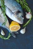 Fresh raw dorado fish with rosemary, garlic and lemon on a black Royalty Free Stock Image