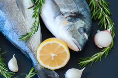 Fresh raw dorado fish with rosemary, garlic and lemon on a black. Slate background. Selective focus. Overhead view Royalty Free Stock Photo