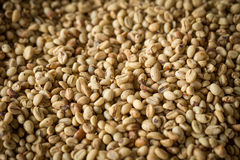 Fresh raw dried coffee beans on coffee beans background. Fresh raw dried coffee beans on coffee beans background Royalty Free Stock Photos