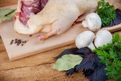 Fresh raw duck mushrooms Stock Images