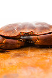 Fresh raw edible brown sea crab. Close Up. Stock Photo
