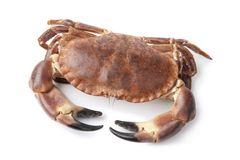 Fresh raw edible sea crab. Isolated on white background Stock Photography