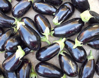 Fresh raw eggplants closeup. Natural background Royalty Free Stock Photos