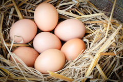 Fresh raw eggs Stock Images