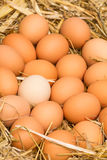 Fresh raw eggs Stock Photography