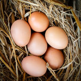 Fresh raw eggs. Fresh eggs with hay on sackcloth Stock Photo