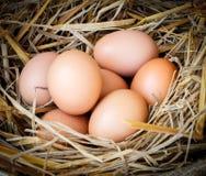 Fresh raw eggs. Fresh eggs with hay on sackcloth Royalty Free Stock Photo