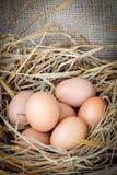 Fresh raw eggs. Fresh eggs with hay on sackcloth Stock Image
