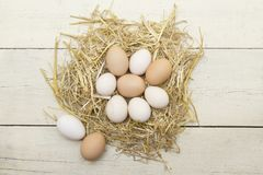 Fresh raw eggs in hen nest. royalty free stock photography