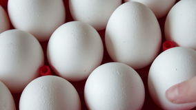 Fresh raw eggs in a red tray stock video footage