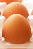 Fresh raw eggs in tray closeup Stock Image