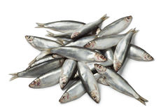 Fresh raw European sprats. On white background Stock Photography
