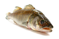 Fresh raw fish Stock Photo