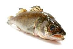 Fresh raw fish. Isolated on white background Stock Photo