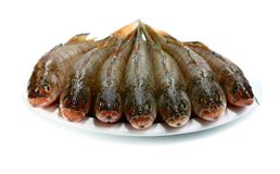 Fresh raw fish Royalty Free Stock Photography