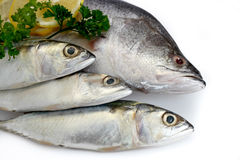Fresh Raw Fish Stock Image