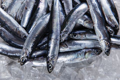Fresh raw fish anchovy on ice Stock Photos