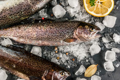 Fresh raw fish brown trout. On a stone table with ice, lemon spices and herbs, top view Royalty Free Stock Images