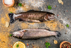 Fresh raw fish brown trout Stock Photography