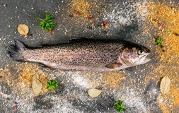 Fresh raw fish brown trout. On a stone table with lemon spices and herbs, top view Royalty Free Stock Images