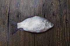 Fresh Raw Fish Carp Caught Lying On A Wooden Stump. Live Fish Crucian Carassius Auratus Gibelio. Stock Photography