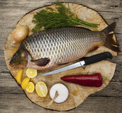 Fresh raw fish carp caught lying on a wooden stump with a knife and slices of lemon and with salt dill. Live fish crucian Carassiu Royalty Free Stock Image