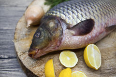 Fresh raw fish carp caught lying on a wooden stump with a knife and slices of lemon and with salt dill. Live fish crucian Carassiu Royalty Free Stock Photos