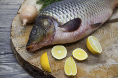 Fresh raw fish carp caught lying on a wooden stump with a knife and slices of lemon and with salt dill. Live fish crucian Carassiu Royalty Free Stock Images