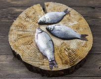 Fresh raw fish carp caught lying on a wooden stump. Live fish crucian Carassius auratus gibelio. Royalty Free Stock Photography