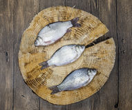 Fresh raw fish carp caught lying on a wooden stump. Live fish crucian Carassius auratus gibelio. Stock Photography