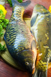 Fresh raw fish carp. On a wooden board in the kitchen Stock Photo