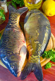Fresh raw fish carp. On a wooden board in the kitchen Royalty Free Stock Photography