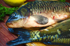 Fresh raw fish carp. On a wooden board in the kitchen Stock Images