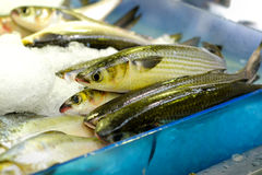 Fresh raw fish. Close up of fresh raw fish on open market, selective focus Royalty Free Stock Images