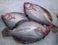 Fresh raw fish. Closeup of fresh raw fish in ice on sea market table Stock Image