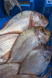 Fresh raw fish common pandora. In the market Royalty Free Stock Photo