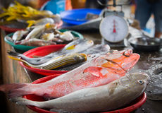 Fresh raw fish. Displayed at a fish market in flores, indonesia Royalty Free Stock Photography