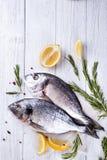 Fresh raw fish dorado Royalty Free Stock Photos